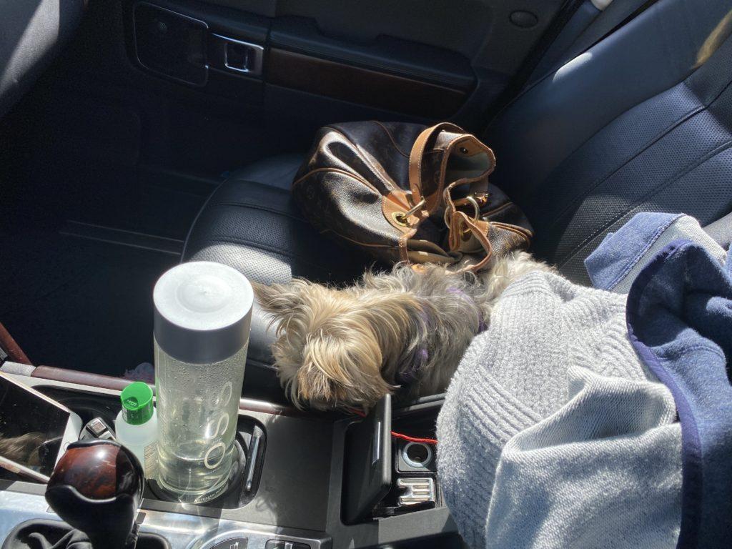 Mochi in the car