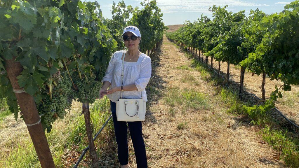 Annie Tan-Yee vineyard