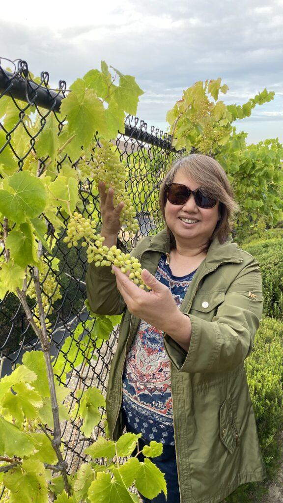 mini vineyard
